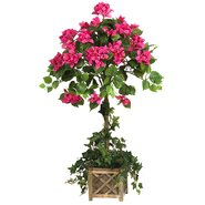 Bougainvillea Beauty Square Topiary in Basket
