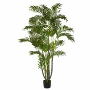 Areca Tree in Pot