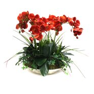 Orchids in Decorative Bowl