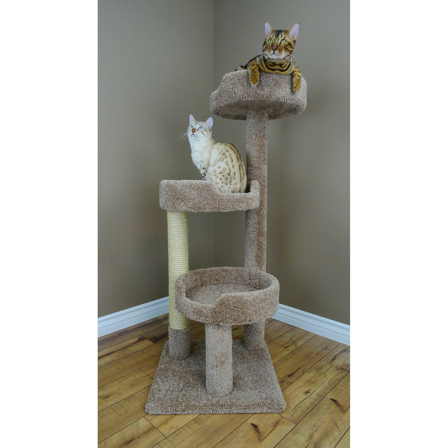 New Cat Condos 50 Quot Premier Kitty Pad Cat Tree Amp Reviews