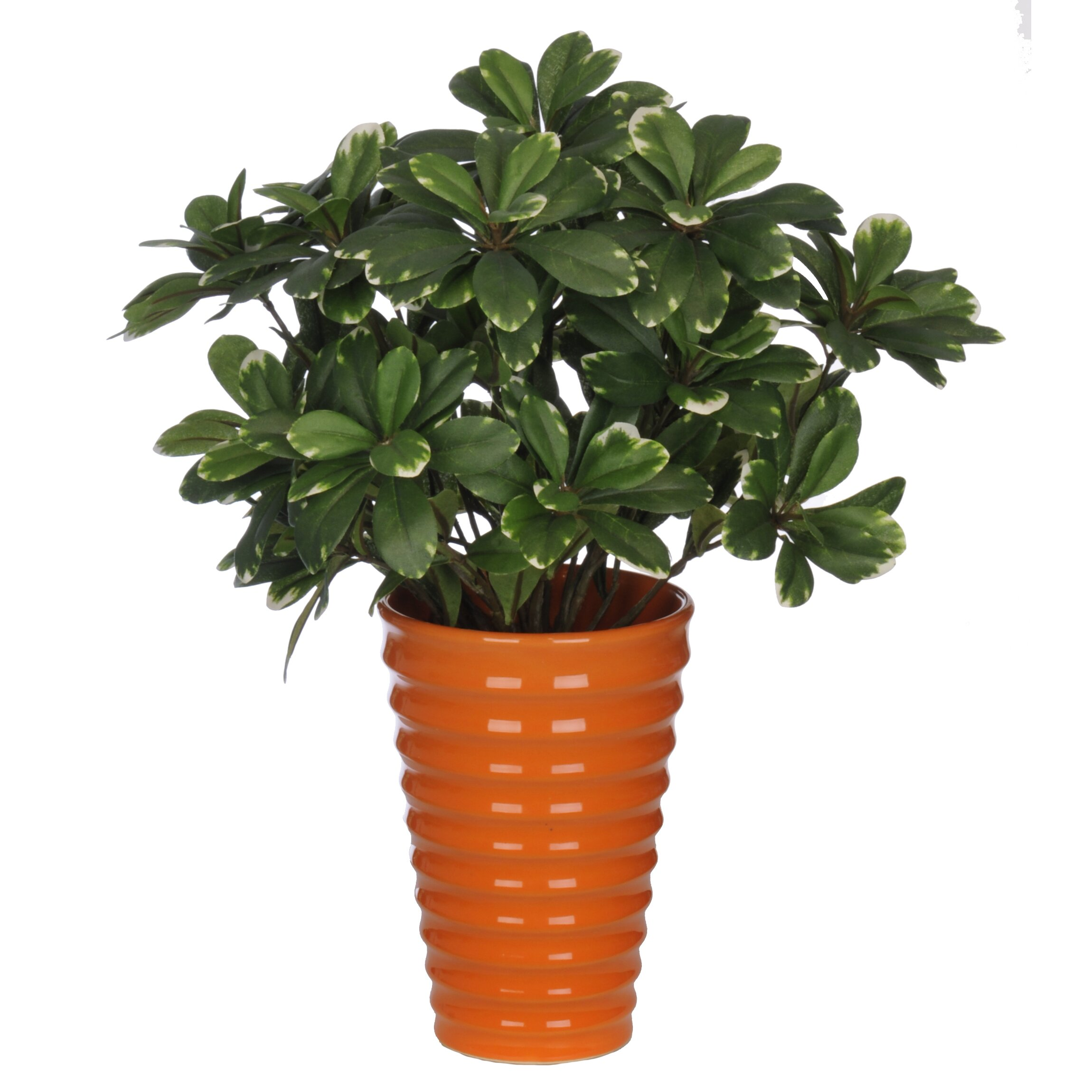 Flower Pots With Artificial Flowers Artificial Mini Variegated Pittosporem Desk Top Plant In