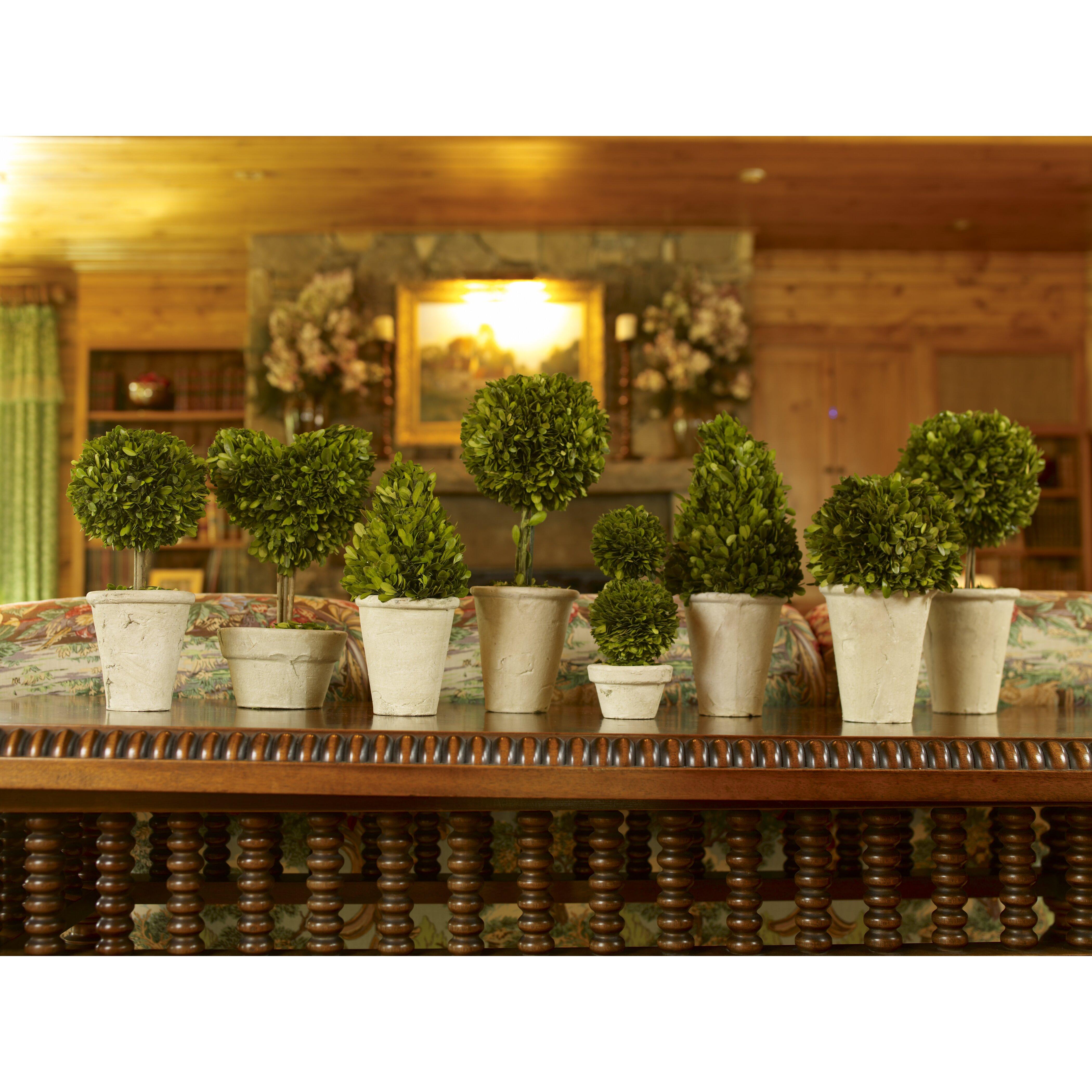 napa home garden 8 piece preserved boxwood topiary in pot set reviews wayfair